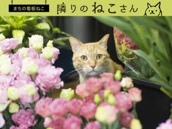 花に囲まれて過ごす、愛され息子。