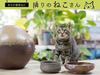 人懐っこい性格の「窯ネコ」。