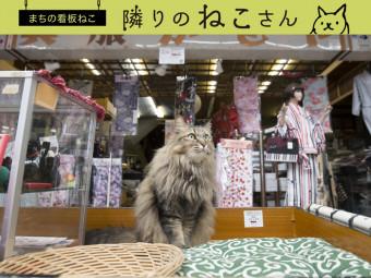 商店街を優しく見守る、老舗の看板娘。