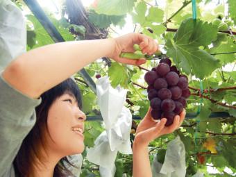 食べ放題で楽しむ秋の味覚! ブドウ狩り5選。(2016年)