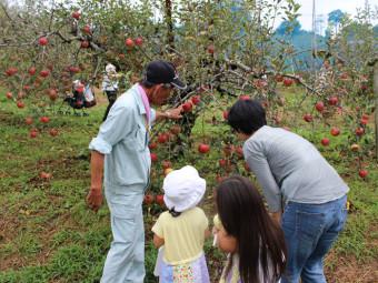 食べ放題で楽しむ秋の味覚! リンゴ&ナシ狩り4選。(2016年)