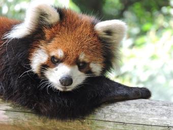 《池田動物園》 岡山県民溺愛?! 『池田動物園』の「現在」に迫る。そして「れさぱんテラス」とは?