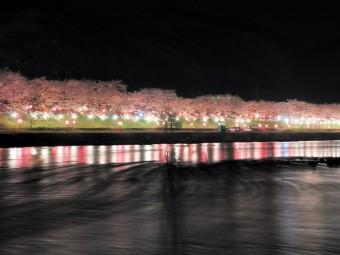 県北の絶景お花見スポット5選。(2016年)