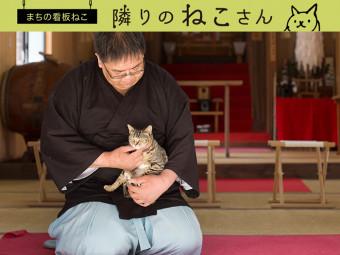 とっても人懐っこい性格にファン多数! 神社の招きネコ。