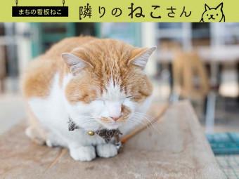 マイペースがいちばん! 農園の癒やし系ネコ。