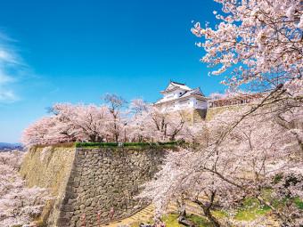 歴史情緒感じる、城に咲く桜(5選)。