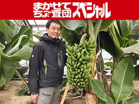 岡山で生まれた、皮ごと食べられる「もんげーバナナ」の秘密に迫る!