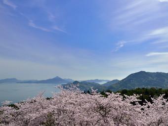 桜を美しい瀬戸内海と共に(2選)。