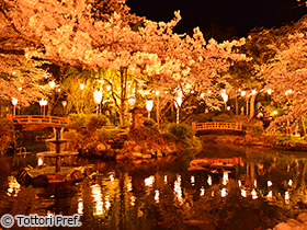 「和」を堪能、日本庭園に咲く桜(3選)。
