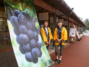 《美星葡萄のマーケット》美星産のブドウを市場価格よりも安価に購入できるオシャレな期間限定マルシェ。