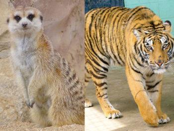 《歳末てんまや動物園》平成最後の開催。年末の『岡山天満屋・葦川会館』が動物園に!
