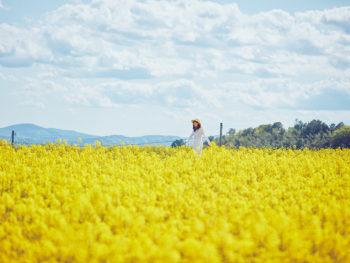 《菜の花まつり》奈義町が菜の花の色彩に包まれる季節が到来。最終日のメインイベントにも注目を!
