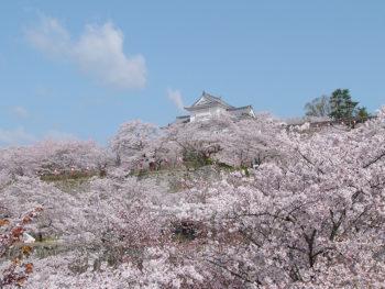 《津山さくらまつり》豪華で多彩なイベントも! 津山が誇る「さくらまつり」で春を満喫しよう!