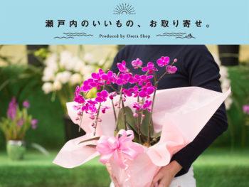 《岡山市北区/スコレー》令和元年の母の日は、「令和」にゆかりがある蘭の花を贈ろう。