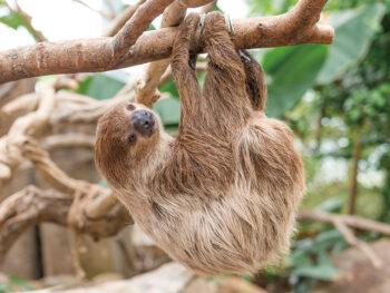 《大アマゾン展》約50種&約1700匹の生物が登場! ジャングル探検の気分で出かけよう!