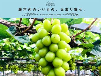 《岡山市/スコレー》ブドウ作りの名家・大内さんが作る、皮ごと食べられて種がないシャインマスカットと瀬戸ジャイアンツ。