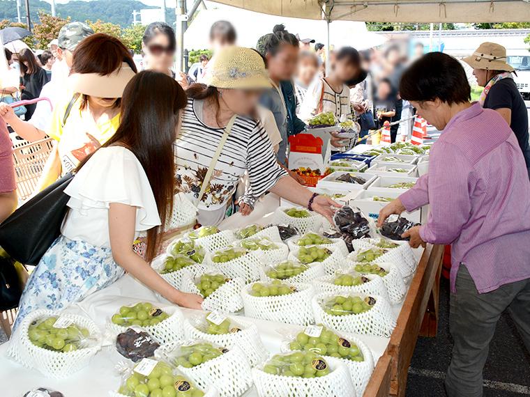 《道の駅「久米の里」ぶどうまつり》毎年恒例! 津山市久米地域のブドウをお得な価格で購入しよう!