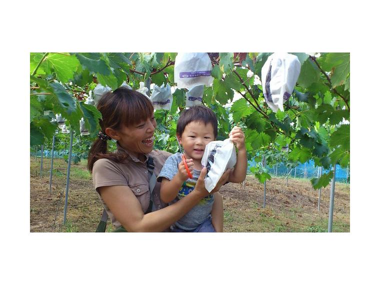 《ピオーネ収穫祭》美味しいブドウを見極めるコツを教わって、じっくり選んで収穫を楽しもう!