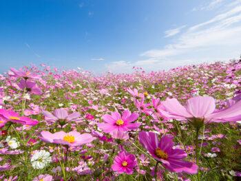 《笠岡市/道の駅 笠岡ベイファーム》きれいな花に、おいしいあれこれ。笠岡の魅力が一堂に!