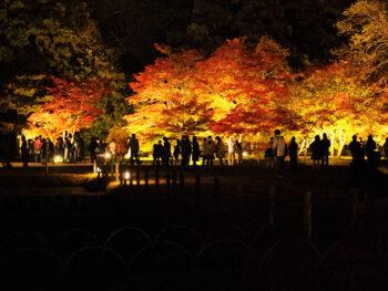 《秋の幻想庭園》紅葉とライトアップで美しく浮かび上がる、夜の後楽園を楽しんで。
