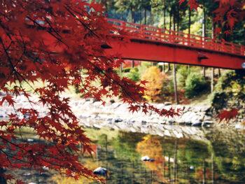紅葉×○○でめぐる 秋の紅葉おでかけガイド 2019 (県内編)