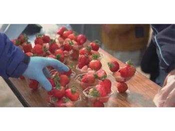 《いちご祭り》行列ができるほど人気。ひとつのパックで5品種のイチゴを食べ比べよう。